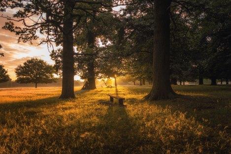 golden light park bench