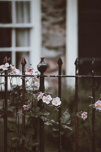 iron gate flowers